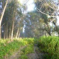 Лес в пойме Оби. Рассеивается последний туман. :: Elena Sartakova