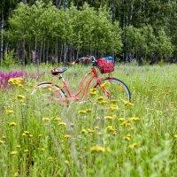 Я буду долго гнать велосипед... :: Сергей Козлов