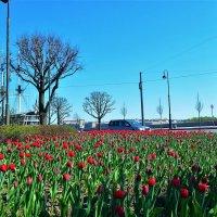 Тюльпаны у Троицкой часовни... :: Sergey Gordoff