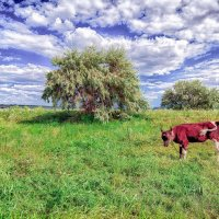 Летний день на лугу. :: Вахтанг Хантадзе