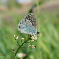 Летняя пора - пора бабочек... :: *MIRA* **