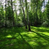 Зеленая планета :: Андрей Лукьянов