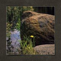 Цветок и камень :: Станислав Лебединский