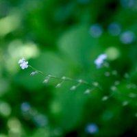 Что за цветок? :: Юрий Буйдин
