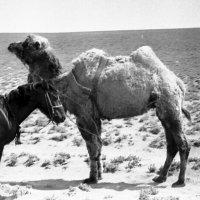 1969-й год.Вблизи полигона Ашулук. :: Иволий Щёголев