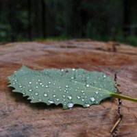 После дождя :: Елена Якушина