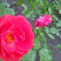 В розовом королевстве :: Нина Корешкова