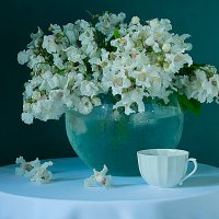 С цветами катальпы прекрасной. :: alfina