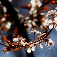 сады цветут 4 :: Александр Прокудин