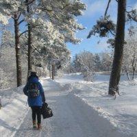 Зима :: Maikl Smit
