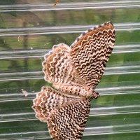 Бабочка :: Алла ZALLA