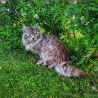 Городская кошка :: Алексей Мартынов
