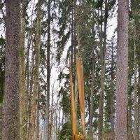 камертон для Мишки (лесной оргАн) :: Petr Popov