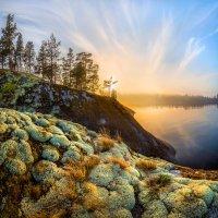Из серии «Растительный мир Ладожских островов» :: Фёдор. Лашков