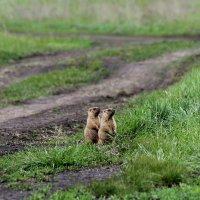 В мире животных :: Екатерина Коняева