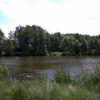 Жёлтый пруд :: Валерий Самородов