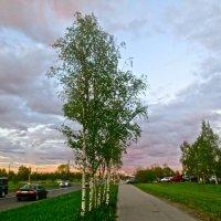 на Кузьминском шоссе в час заката :: Елена