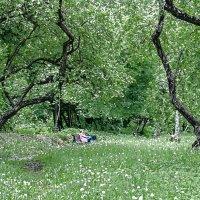 В парке :: Михаил Кондратенко