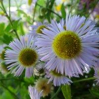 Эти летние цветы :: татьяна