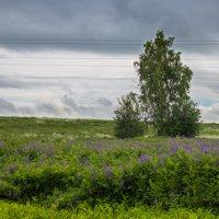 летний пейзаж :: Ольга (Кошкотень) Медведева