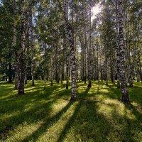 Лето :: Игорь Иванов