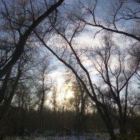 Небо осенью. :: Elena Sartakova