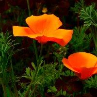 золотые цветы :: Любовь Потравных