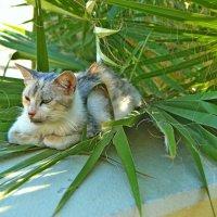 Пальма и кот... :: Vladimir Semenchukov