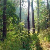 Утреннего солнышка надежды... :: Лесо-Вед (Баранов)
