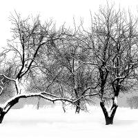 Яблоневый сад на Даче графа Куракина :: Иван Миронов