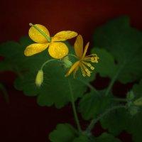 Цветы у дома :: Ирина Румянцева