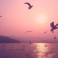 Байкальские чайки :: Анна