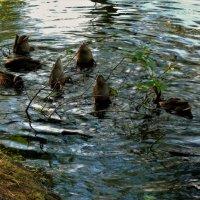Синхронное плавание... :: Sergey Gordoff