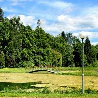 Парковый пруд :: Marina Pavlova