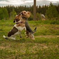 Собачья дружба :: Сергей Петрицкий