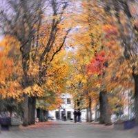 ..осень.. :: Георгий Никонов
