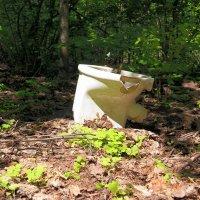К вопросу о том, как справить нужду в лесу:) :: Андрей Заломленков