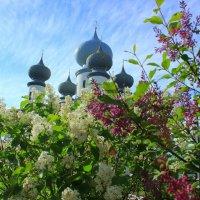 купола Успенского собора :: Сергей Кочнев