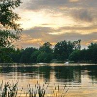 Вечерняя прогулка вдоль Малаховского озера :: Олег Пучков