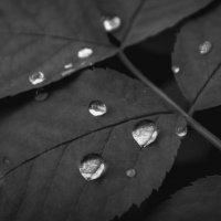 Капли дождя :: Татьяна Шторм