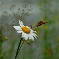 застенчивое лето :: StudioRAK Ragozin Alexey