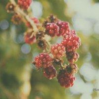 Summer :: Екатерррина Полунина