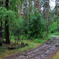 В промокшей и ненастной тишине... :: Лесо-Вед (Баранов)