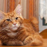 Портрет котенка :: Татьяна Смирнова