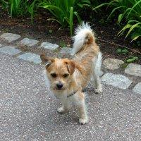 Милая собачка :: Nina Yudicheva