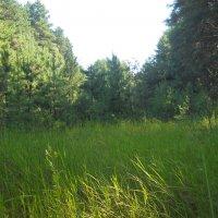 Утром в лесу :: Галина