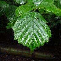 А листве, может, и нравятся наши дожди :: Андрей Лукьянов