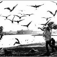 Birds :: Танкист .