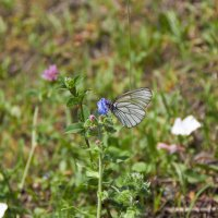 Бабочка :: Надежда Бондаренко