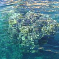 Кораллы :: Марина Домосилецкая